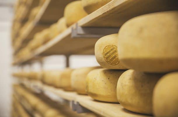 Cheese Wheels at Gunn's Hill