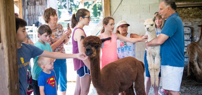 lazy-acre-alpacas-bloomfield-exterior-kids-alpacas