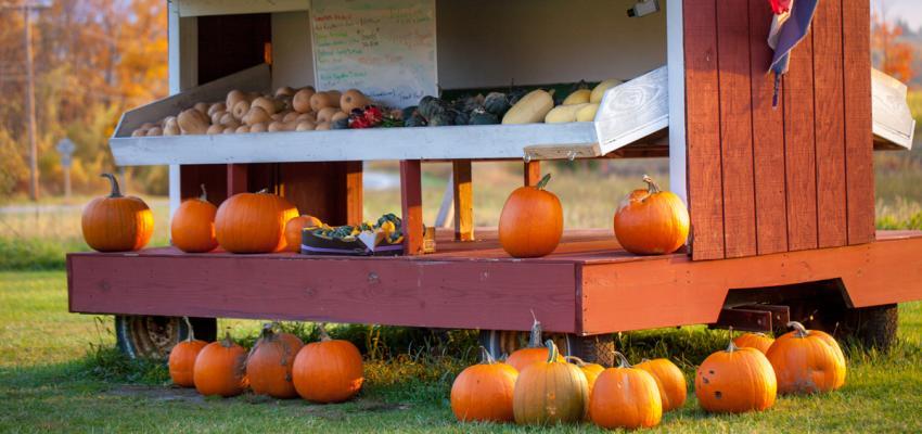 Fall-Pumpkins-Farm-Stand