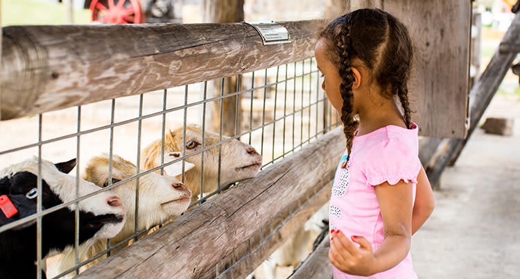 Child feeds goats at Deanna Rose Farmstead in Overland Park