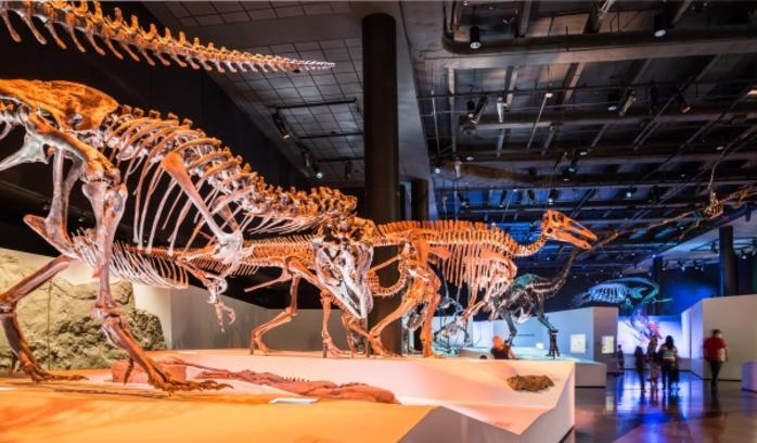 Dinosaur Bone Exhibits at Houston Museum of Natural Science