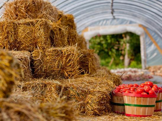 Find barrels of fresh fruit + vegetables | credit AB-PHOTOGRAPHY.US