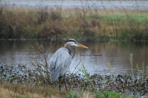Heron - Creole Nature Trail Photo Story | Time and Beauty Photography