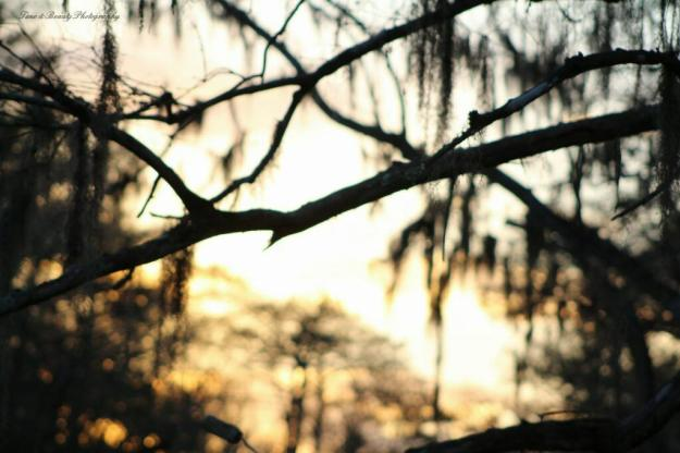 Creole Nature Trail Photo Story | Time and Beauty Photography