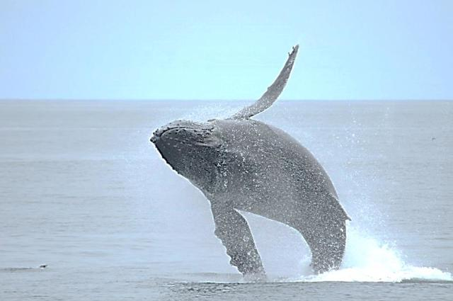Whale in Monterey Bay