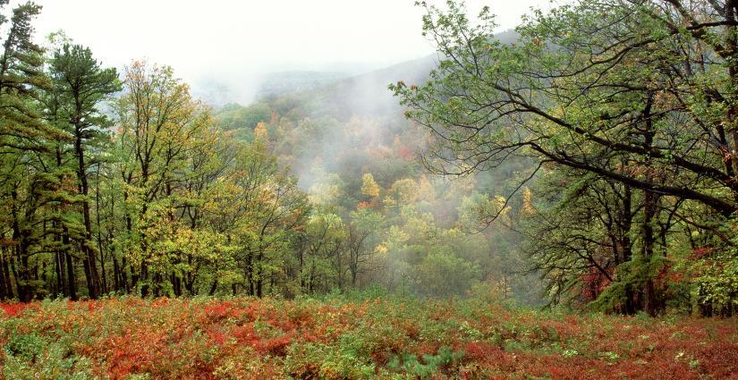Kings Gap Fall Leaves