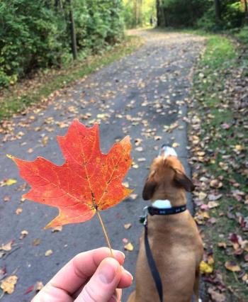 Trabue Nature Preserve Walk in the fall