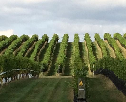 HacketWinery01_DiscoverLehighValley