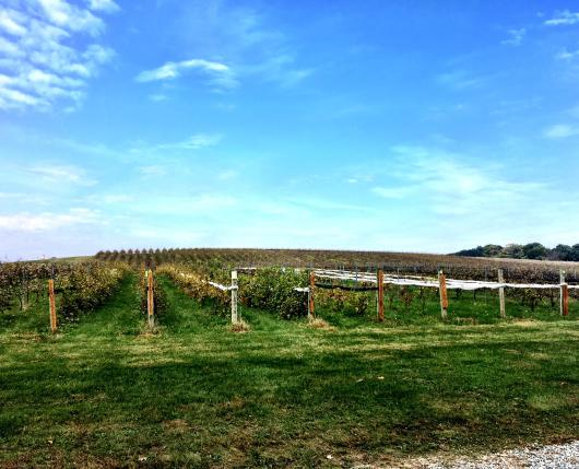 HacketWinery02_DiscoverLehighValley