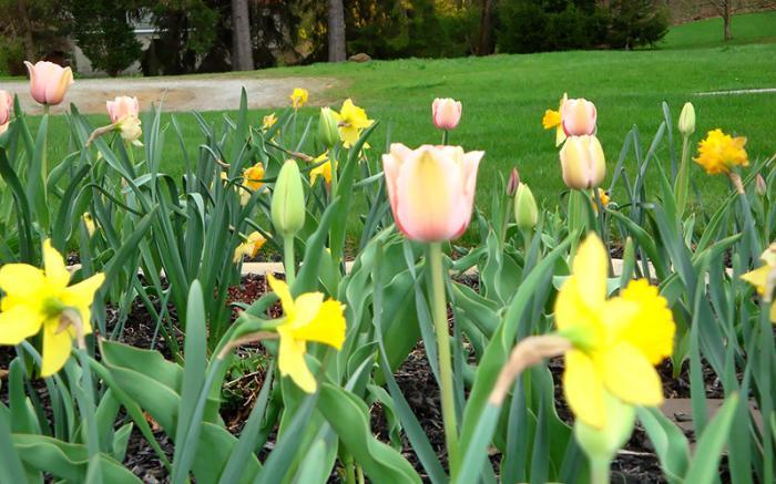 Flowers at Country Seasons Bed & Breakfast
