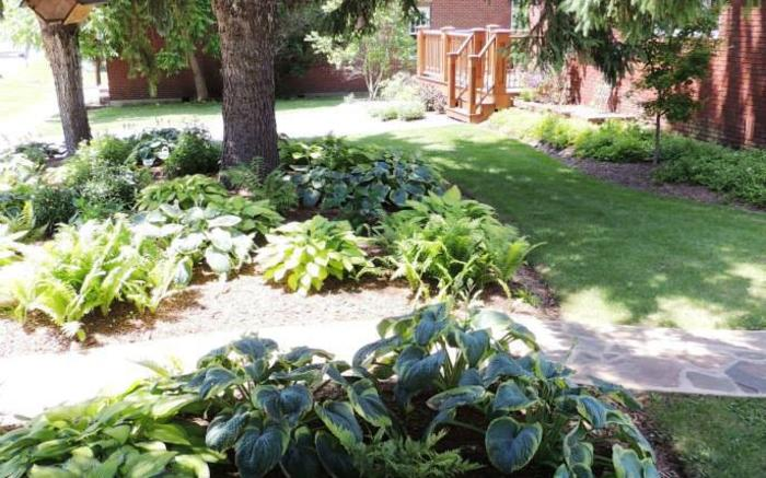 Fernwalk's Spruce trees, hostas and ferns grace the front of the property