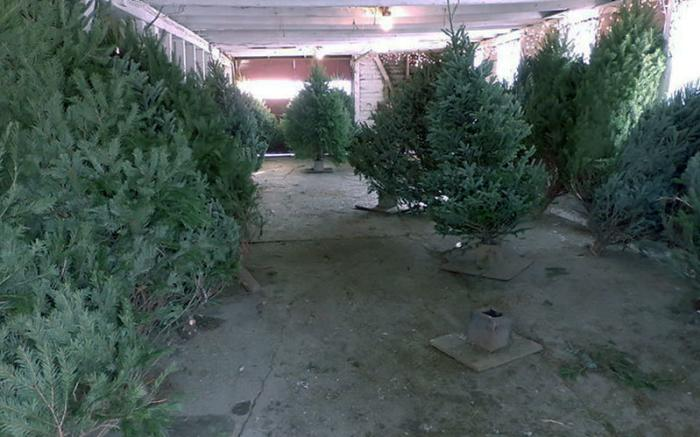 Pre cut trees