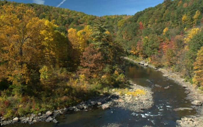 Casselman River Watershed