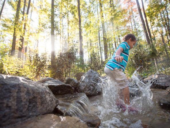 Hideaway Woods - Stream