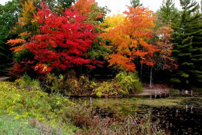 Fall at Lake 'N Pines Lodge