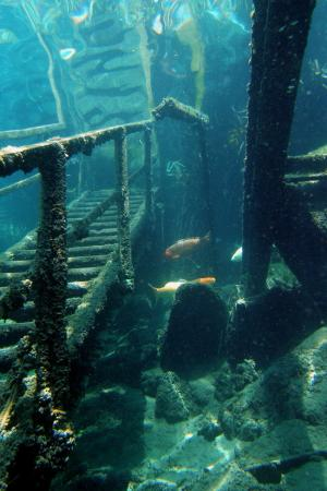 Dutch-Springs-is-the-largest-freshwater-scuba-diving-facility
