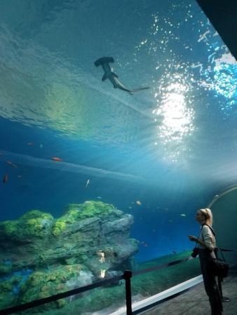 Pacific Seas Aquarium at Point Defiance Zoo & Aquarium