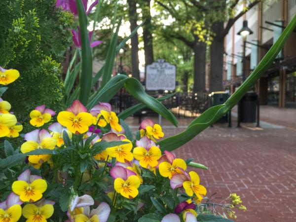 Downtown Mall Flowers
