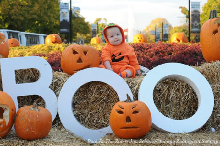 Boo! At The Zoo