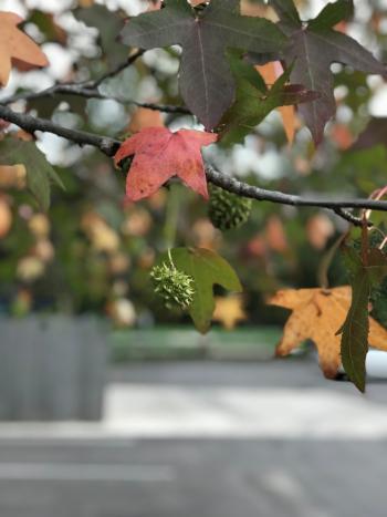 Avery Park Fall Leaves