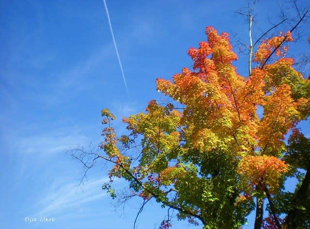 Fall Rainbow Tree - Fall Photo