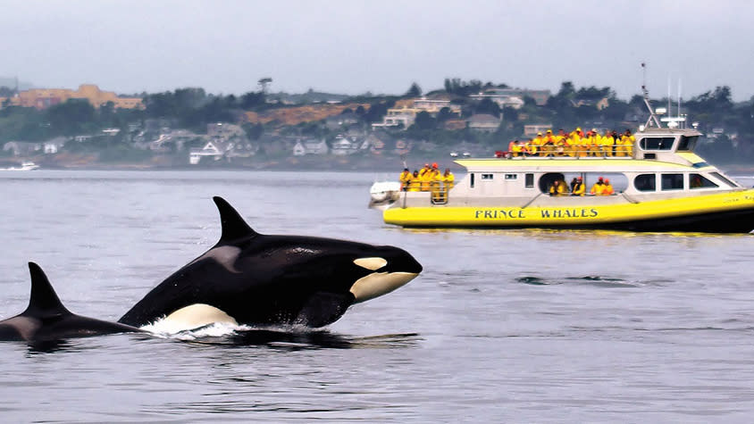 Prince of Whales Whale Watching
