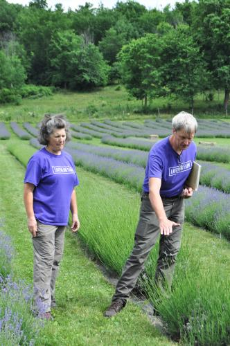 Dave and Diane standing over lavender as they give a tour at Lavenlair Farm