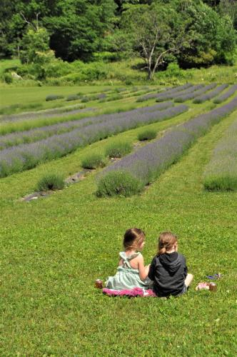 Two little girls sitting on the grass by lavender field at Lavenlair Farm