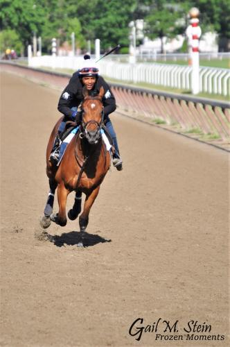 Horse running during workouts.
