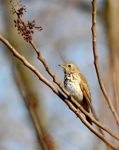 Birding in Greater Philadelphia