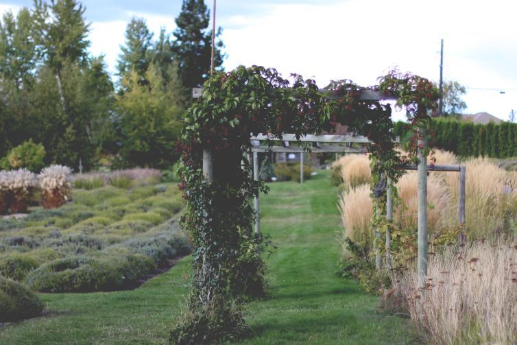 Gardens at Okanagan Herb and Lavender Farm