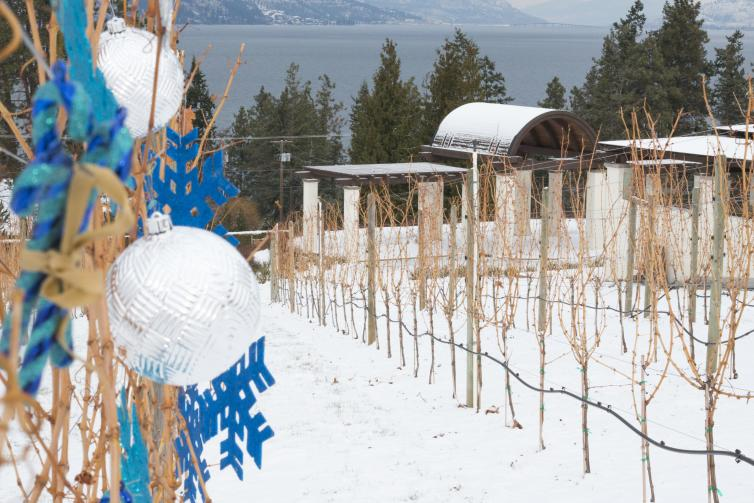 Decorated Vines at CedarCreek Winery