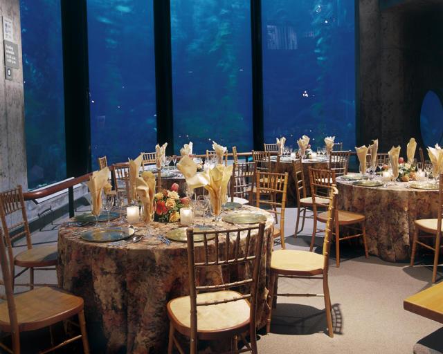 Group Event at the Monterey Bay Aquarium