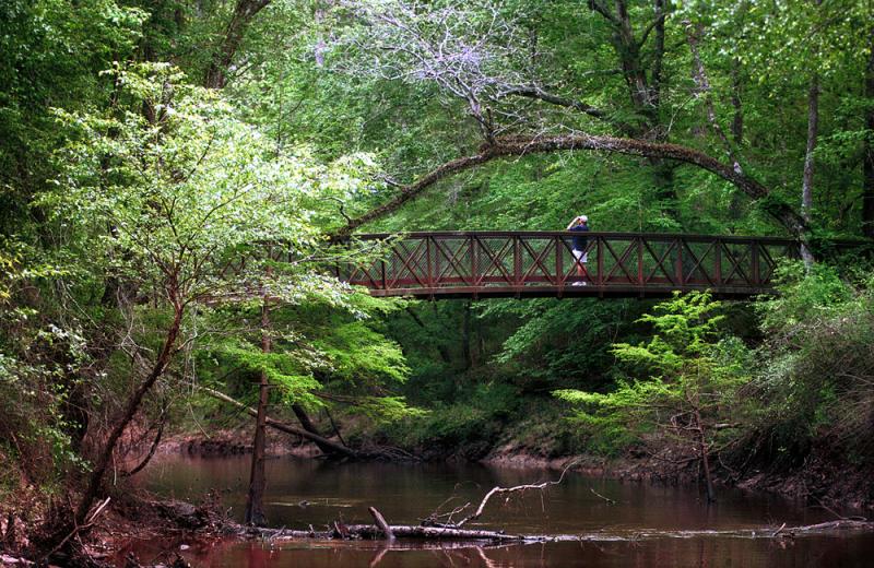 Big Thicket Bridge
