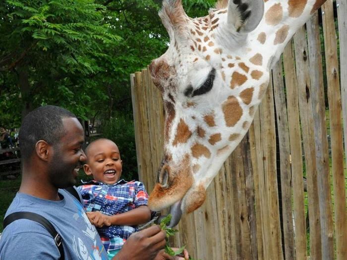 Father and daughter feeding a giraffe some kale