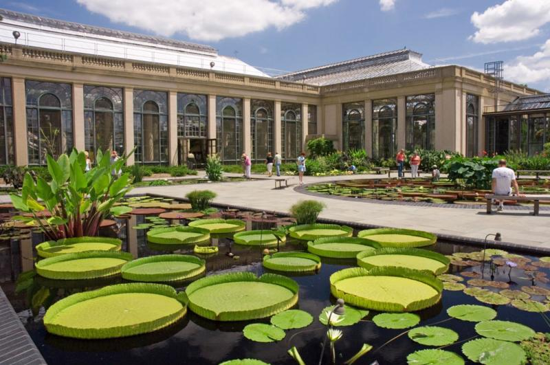 Longwood Gardens - Lilly Pads