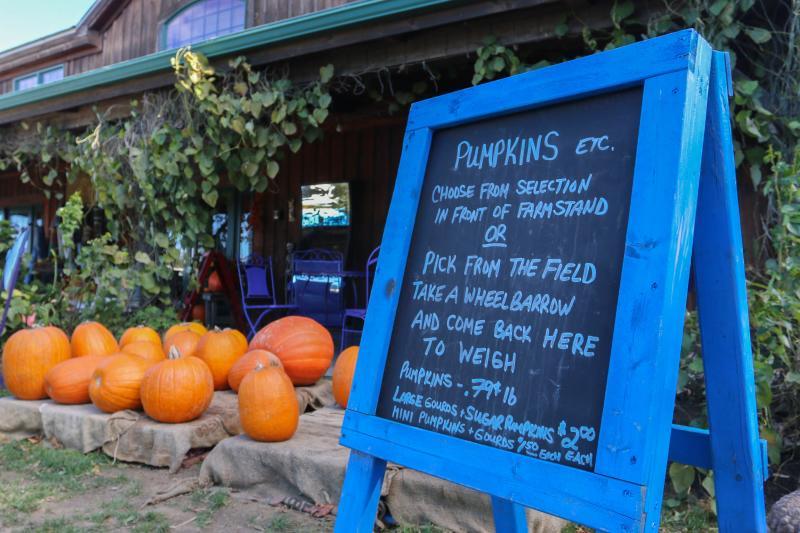 Sweet Berry Farm Fall