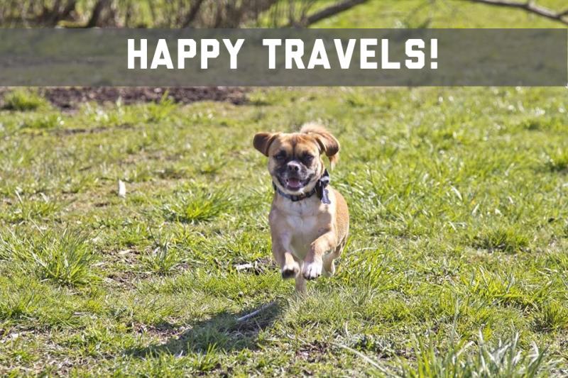 Dog Travel2