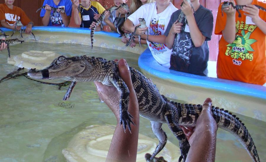 Holding an alligator at Insta-Gator