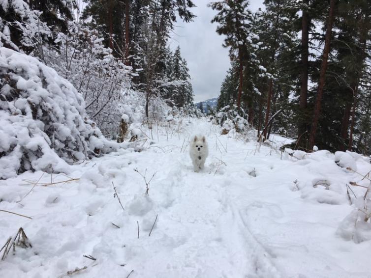 Dog at Telemark