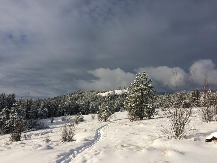 Bear Creek Snowy Trail