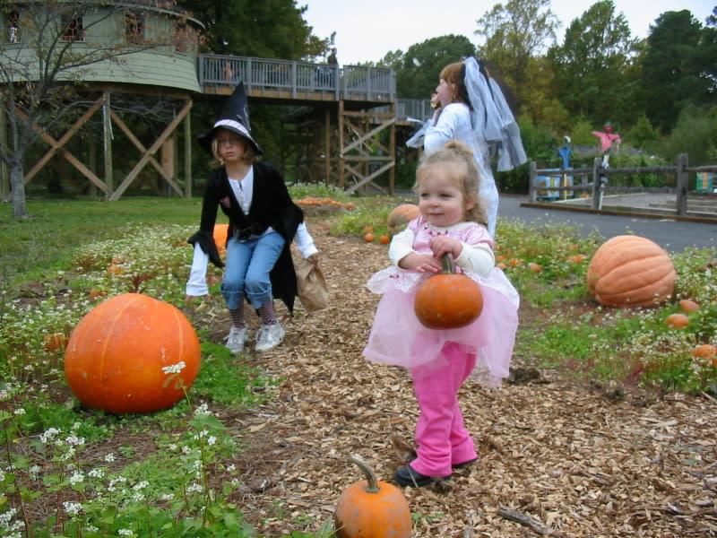 Lewis Ginter pumpkins