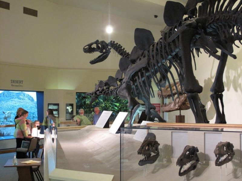 MSU dinosaurs