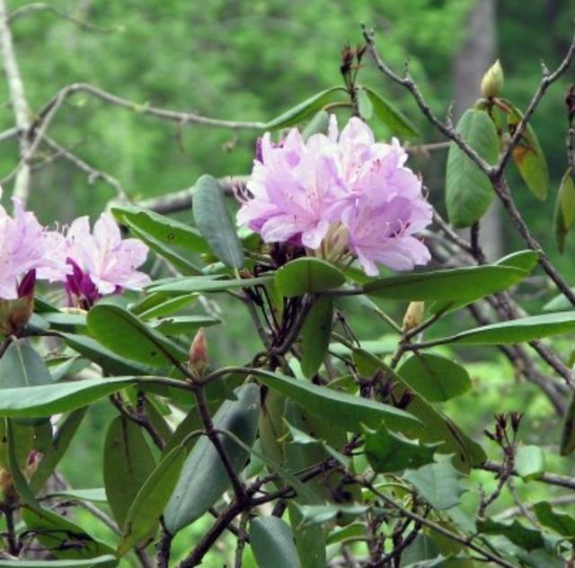 FlowerHill