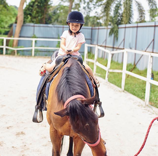 Blackcreek Horse Farm