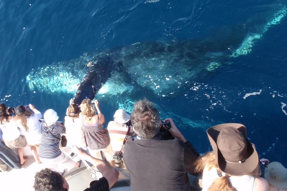 Humpback Whale by boat