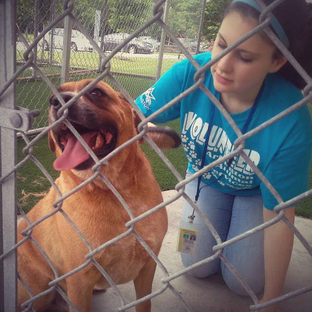 The author's daughter found her purpose helping abandoned animals like Stallone.