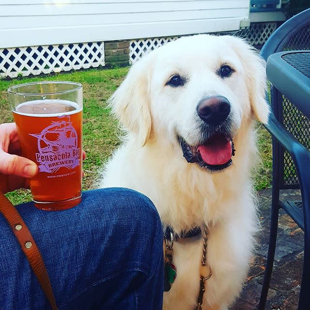 Brewery Dogs