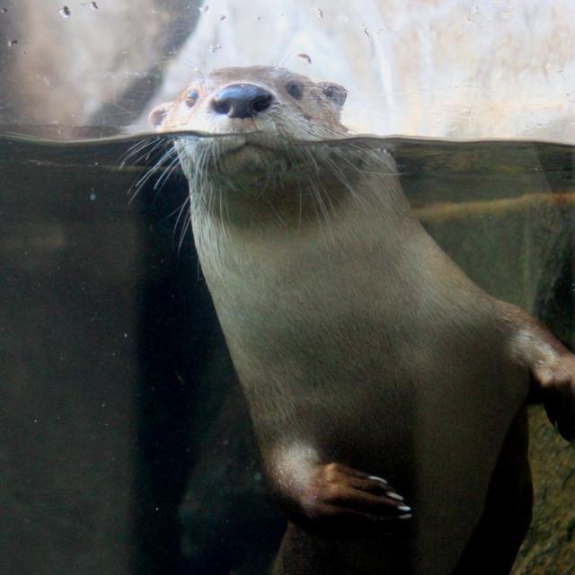 Maymont Nature Center Otter