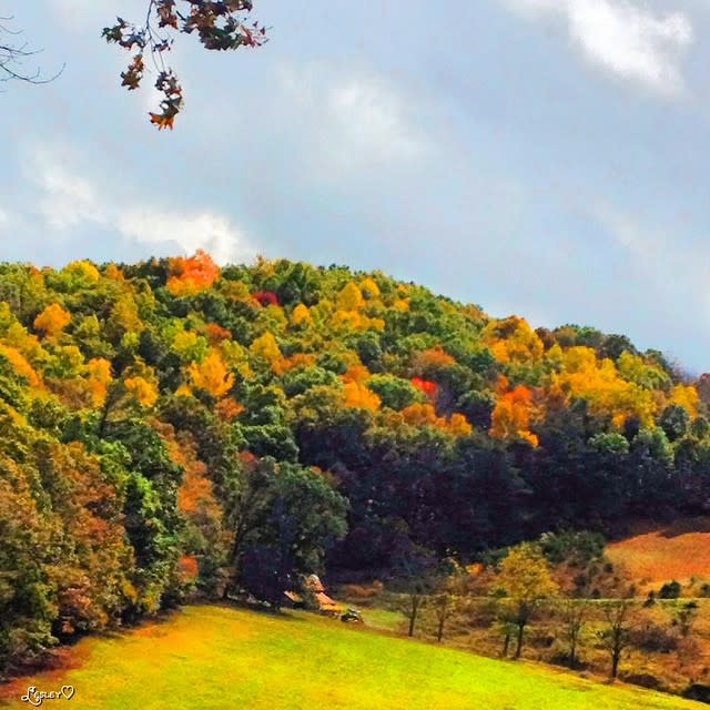 Colorful Fall Trees - Fall Photo
